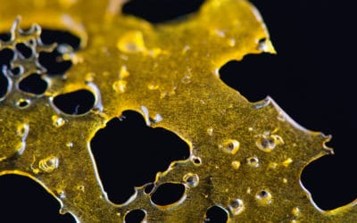 The Key Differences Between Popular Concentrates